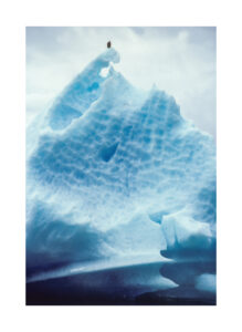 Bald Eagle on grounded Iceberg
